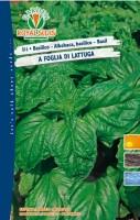 basilico lattuga