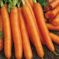 carota2[1]
