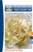 cicoria castelfranco tardiv