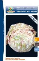 cicoria lusia precoce