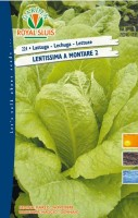 lattuga lentissima a montar