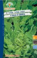 lattuga quercia