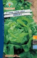 lattuga smeraldo