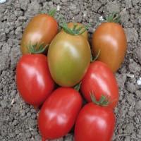 pomodoroindeterminato14[1]