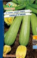 zucchino alberello