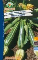 zucchino napoli