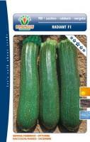 zucchino radiant