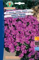 600624-Aubretia porpora tr
