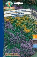 600626- Aubretia grand mix
