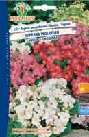 600628-begonia superba mix