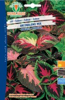 600648-COLEUS ARCOBAL. MIX
