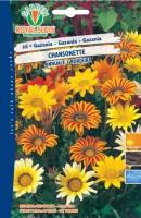 600668-GAZANIA CHANSONETTE