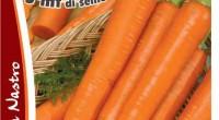carota rotin-001