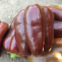 peperone ebano
